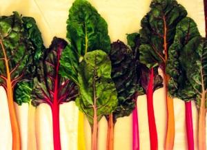 La bietola tricolor dell'Azienda Agricola l'Acero