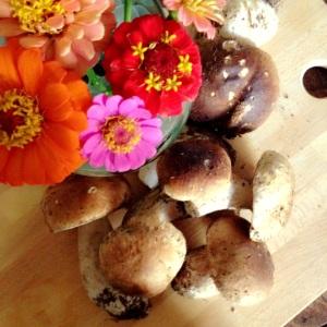 tempo di funghi